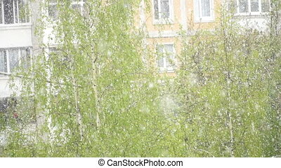 very rare natural phenomenon, snowfall in summer. slow...