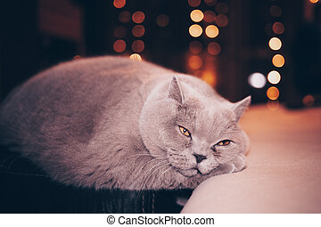 Very sad cat