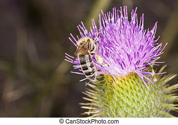 very small bee on the flower