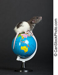 rat on the globe