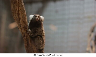 very small monkey in zoo