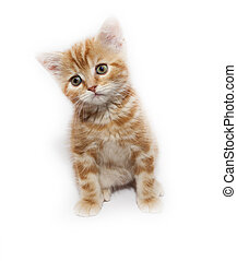 kitty - very small redhead kitty on white background