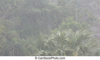 Very strong tropical rain shower wall. Palm trees and trees...