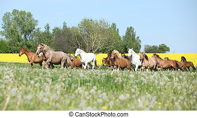 Very various barch of horses running on pasturage - Very ...