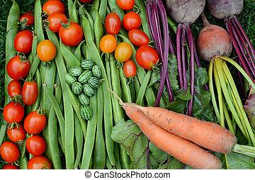 verzamelde, groentes, toewijzing, vers