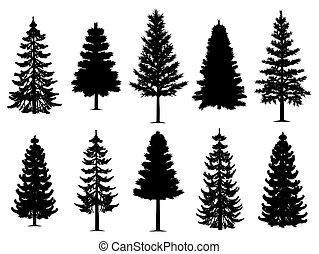 verzameling, bomen, spar, dennenboom