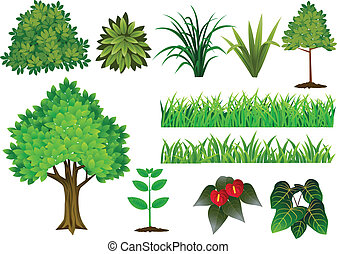 verzameling, boompje, plant