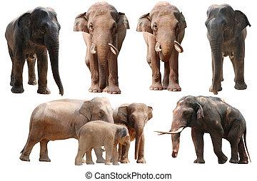 verzameling, elefant