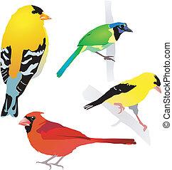 verzameling, van, birds., vector., eps10