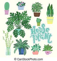 verzameling, van, decoratief, houseplants, vrijstaand, op wit, achtergrond., bundel, van, modieus, planten, groeiende, in, potten, of, planters., set, van, mooi, natuurlijke , thuis, decoraties, met, lettering, woord, houseplant.