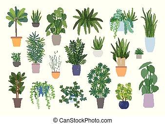 verzameling, van, decoratief, houseplants, vrijstaand, op wit, achtergrond., bundel, van, modieus, planten, groeiende, in, potten, of, planters., set, van, mooi, natuurlijke , thuis, decorations., plat, kleurrijke, vector, illustration.