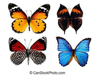 verzameling, van, gekleurde, vlinder, vrijstaand, op wit
