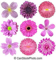 verzameling, van, gevarieerd, roze, paarse , rode bloemen, vrijstaand