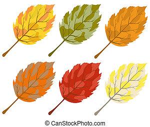verzameling, van, kleur, autumn leaves