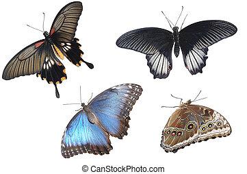 verzameling, van, kleurrijke, vlinder, vrijstaand, op wit
