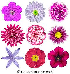 verzameling, van, negen, gevarieerd, roze, paarse , rode bloemen, vrijstaand