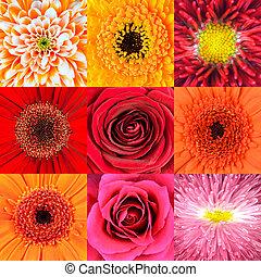 verzameling, van, negen, rode bloem, macros