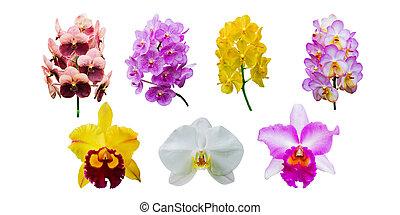 verzameling, van, orchidee, bloem, vrijstaand, op wit