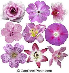 verzameling, van, roze, en, purpere bloemen, vrijstaand, op wit
