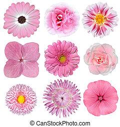 verzameling, van, roze, witte bloemen, vrijstaand, op wit