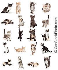 verzameling, van, schattig, katjes, vrijstaand, op wit