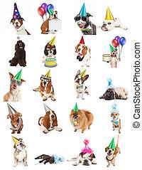 verzameling, van, verjaardagsfeest, dog, foto's
