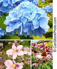 verzameling, van, zomer, bloemen