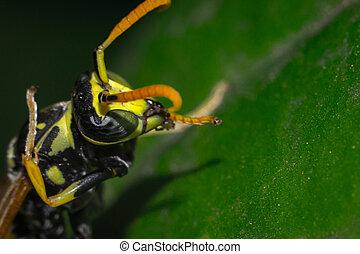 vespa, primo piano, macro