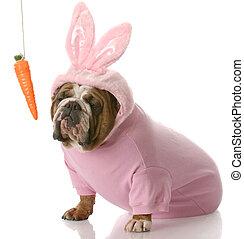vestido, conejito, pascua, perro, arriba