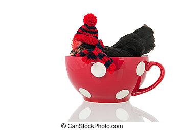 vestido, tazón de pollo, rojo, sopa