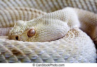 veszélyes, kígyó