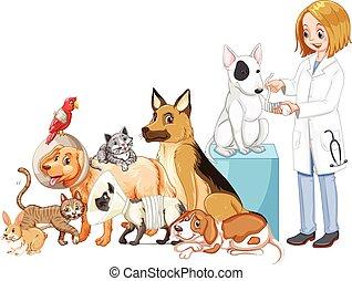 Vet and many injured animals illustration