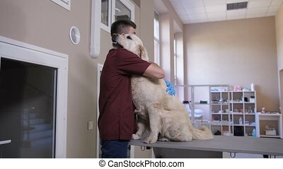 Vet doctor comforting dog patient before surgery - Handsome...