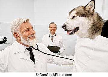 Vet doctor examining big dog with stethoscope.