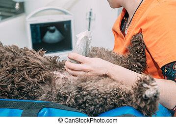 Vet doing an ultrasound on a brown dog