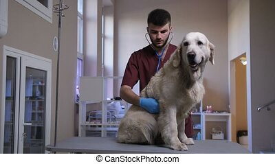 Vet during dog cardiology check-up at pet care