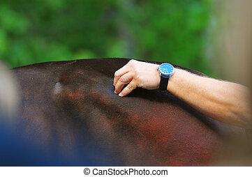 Vet examining horse pushing on horse back