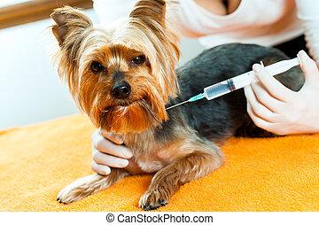 Vet giving dog injection.