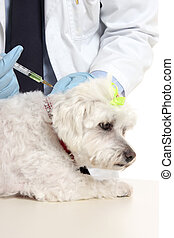 Vet giving dog needle injection - Veterinarian giving a...
