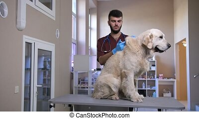 Vet making injection to dog's scruff of neck - Young male...