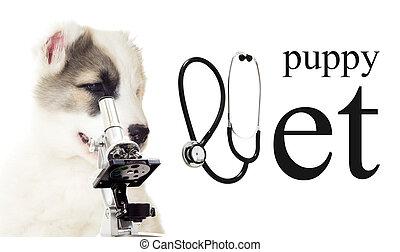 vet puppy