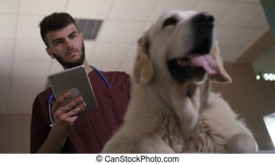 Vet scrolling on touchpad and stroking dog - Low angle shot...