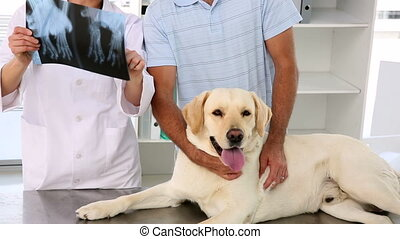 Vet showing xray to labradors owner in her office