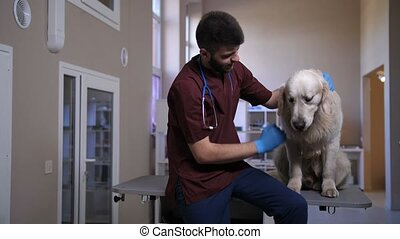 Vet stroking and talking to patient dog at clinic
