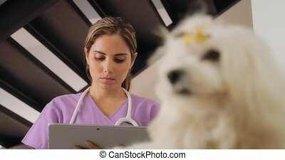 Vet Using Tablet Computer During House Call With Dog -...