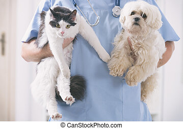 Vet with dog and cat