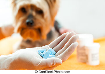 Vet with dog pills. - Close up of human hand holding pills...