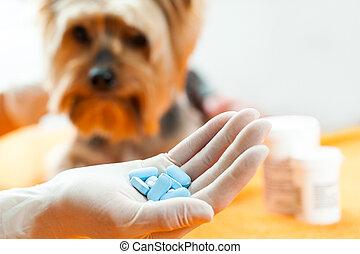 Vet with dog pills. - Close up of human hand holding pills...