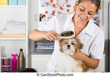 Vet with his dog Shih Tzu - Veterinarian drying your dog...