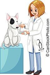 Vet wrapping dog's leg illustration